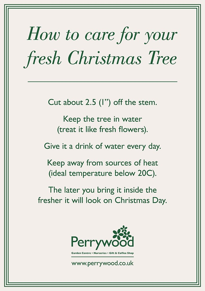 Care advice for your cut christmas tree perrywood - Tips to care for a natural christmas tree ...