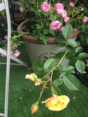 rain damaged pot for top tips (2)