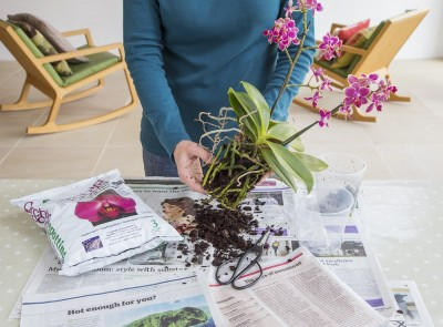 Orchid re-potting