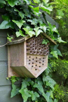 An insect house mounted on the side of a shed to help wildlife.GAP Photos 2019.