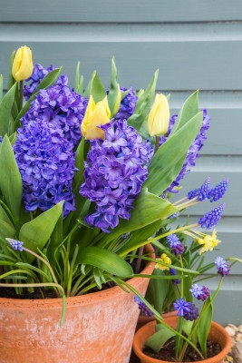Multi Layered Bulb container with Muscari arm