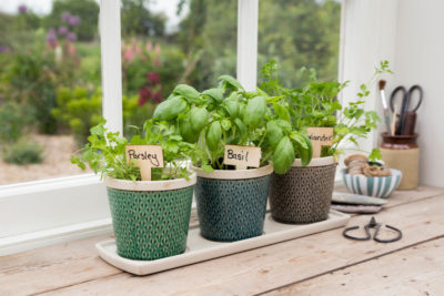How to'? Create a Windowsill Herb Garden - Perrywood